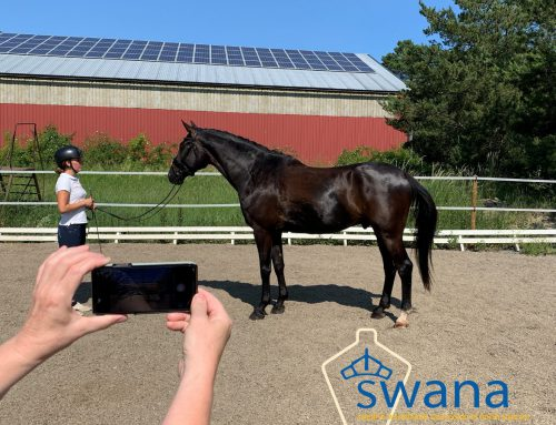 SWANA in USA and Canada inspect foals via Ridesum!