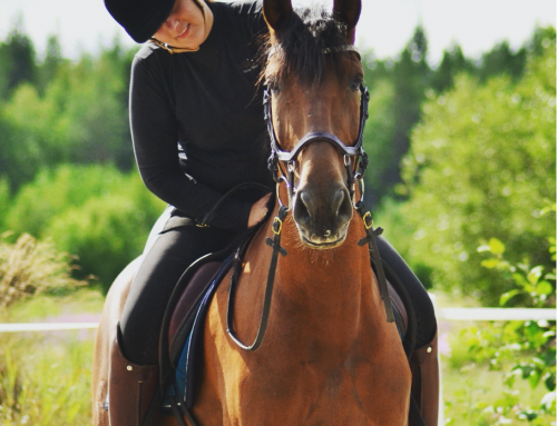 The concept of Working Equitation is being conveyed from Portugal to Piteå via Ridesum