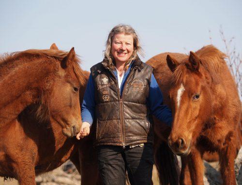 """""""Vi måste sköta oss för att hästbranschen ska ha en framtid"""""""